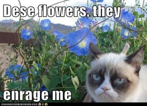 Dese flowers, they  enrage me