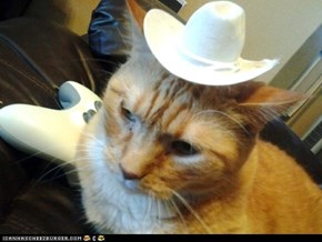 Cow cat?