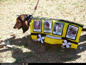 Bella dressed as the Basset Hound Rescue Bus