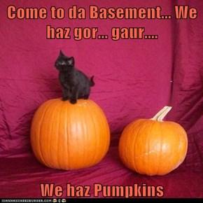 Come to da Basement... We haz gor... gaur....  We haz Pumpkins