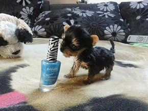 Around the Interwebs: Is This the Smallest Dog You've Ever Seen?