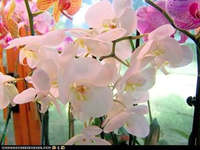 These are called Phaleanopsis...really!