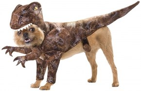 Dog Costume of the Day