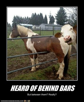 HEARD OF BEHIND BARS