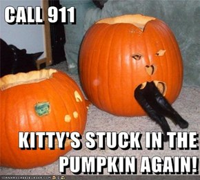 CALL 911  KITTY'S STUCK IN THE PUMPKIN AGAIN!