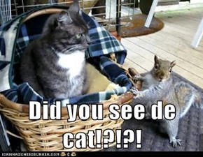Did you see de cat!?!?!