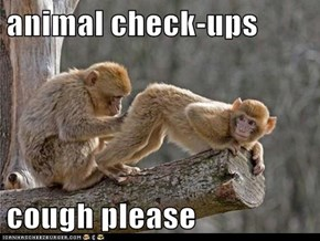 animal check-ups  cough please