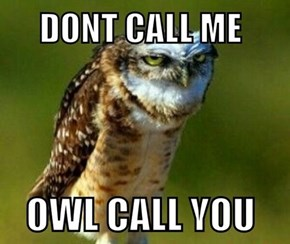Oh C'mon, Owl, That Was SOLID!