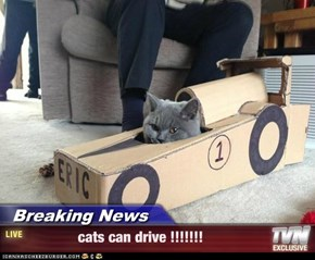 Breaking News -              cats can drive !!!!!!!