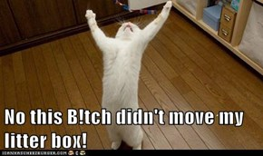 No this B!tch didn't move my litter box!