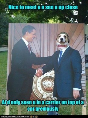 Mitt let the dog out