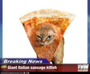 Breaking News - Giant italian sausage kitteh