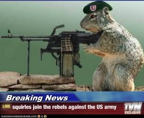 Breaking News - squirles join the rebels against the US army