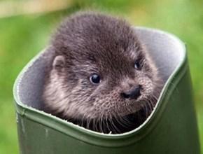 Otter Boot