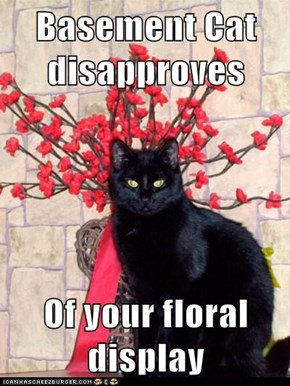 Basement Cat disapproves   Of your floral display