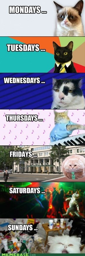 Cats' week in Timeline