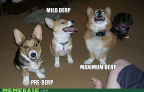 Stages of Corgi Derps
