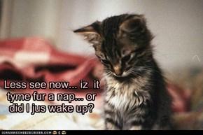 Less see now... iz  it tyme fur a nap... or did I jus wake up?