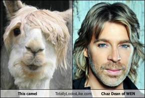 This camel Totally Looks Like Chaz Dean of WEN
