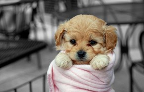 Cyoot Puppy ob teh Day: All Wrapped Up