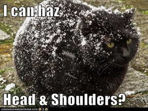 I can haz  Head & Shoulders?