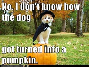 No. I don't know how the dog  got turned into a pumpkin.