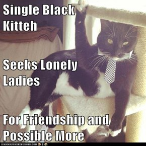 Single Black                     Kitteh  Seeks Lonely                    Ladies For Friendship and Possible More