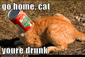 go home, cat  youre drunk