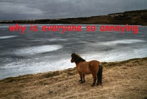 I Know That Feel, Horsey Friend