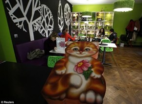 Cat Republic: A Kitteh Café