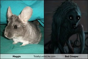 Maggie Totally Looks Like Bed Creeper