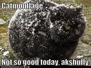 Catmouflage  Not so good today, akshully
