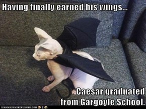 Having finally earned his wings...