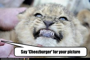 Say 'Cheezburger' for your picture