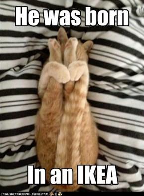 IKEAcat