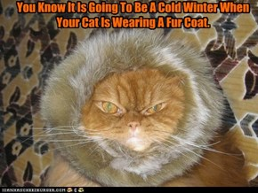 You Know It Is Going To Be A Cold Winter When Your Cat Is Wearing A Fur Coat.