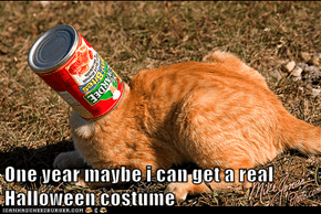 One year maybe i can get a real Halloween costume