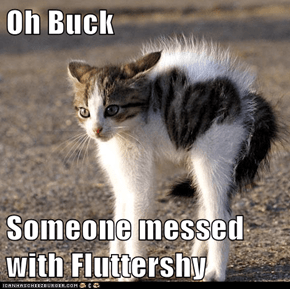 Oh Buck  Someone messed with Fluttershy