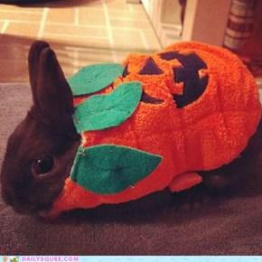 Jack-o-bunny!