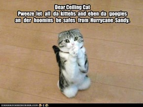Dear Ceiling Cat Pweeze  let   all   da  kittehs  and  eben  da   googies   an   der   hoomins   be  safes   from  Hurrycane  Sandy.