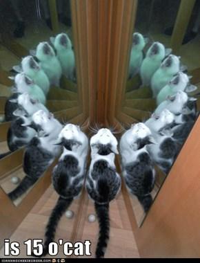 is 15 o'cat