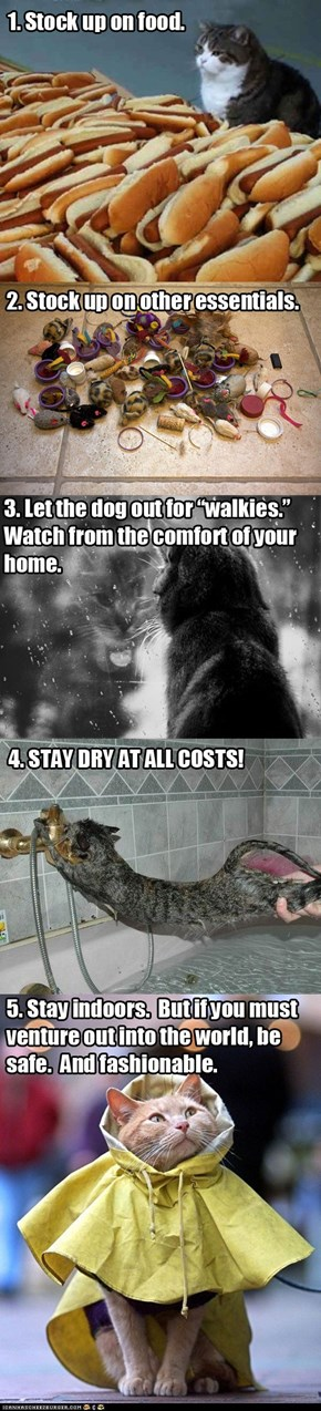 Hurricane Sandy Preparedness for Cats in Five Easy Steps