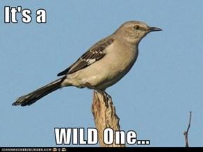 It's a  WILD One...