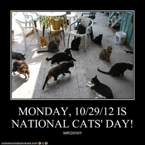 MONDAY, 10/29/12 IS NATIONAL CATS' DAY!