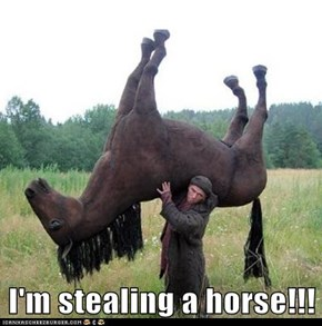 I'm stealing a horse!!!