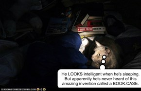 He LOOKS intelligent when he's sleeping.  But apparently he's never heard of this amazing invention called a BOOK.CASE.