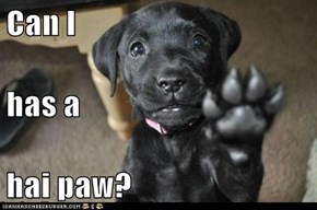 Can I  has a  hai paw?