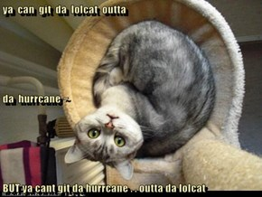 ya  can  git  da  lolcat  outta da  hurrcane ~ BUT ya cant git da hurrcane . . outta da lolcat