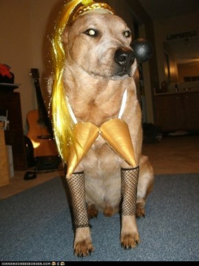 Madonnadog