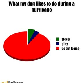 What my dog likes to do during a hurricane